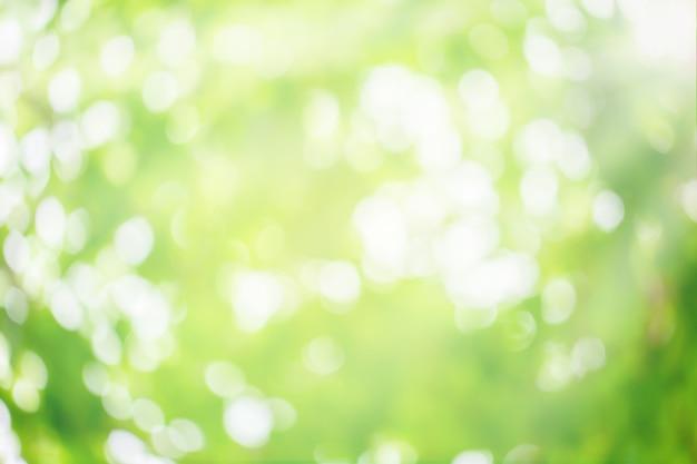 Abstrakter naturhintergrund. grüne bokeh-natur. grünes bokeh außerhalb des fokushintergrunds vom naturwald.