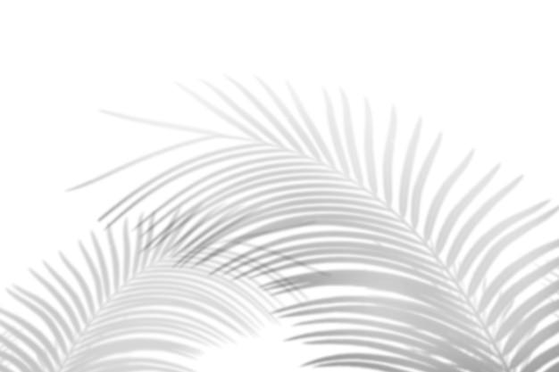 Abstrakter palmblattschatten auf weißem wandhintergrund. leerer kopierplatz.