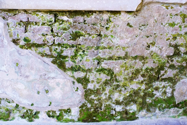 Abstrakter retro- alter wandziegelstein knackt mit mooshintergrund