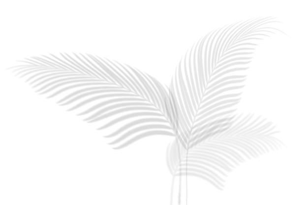 Abstrakter schatten schwarz weißer palmblattschatten auf einem weißen wandhintergrund. leerer kopienraum.