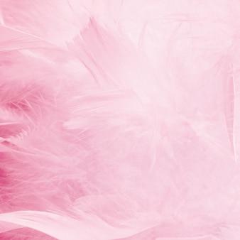 Abstrakter schöner rosa ton versieht hintergrund mit federn. flauschige federmode-design vintage-bohème-stil pastell textur. hochzeit, jubiläum, valentinstag-konzept. weicher fokus.