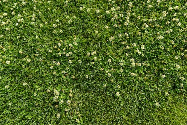 Abstrakter texturhintergrund, natürliches hellgrünes gras