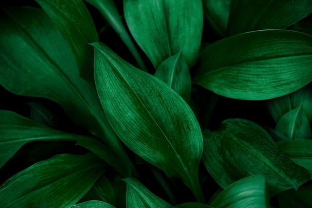 Abstraktes grünes blatt textur natur hintergrund tropisches blatt