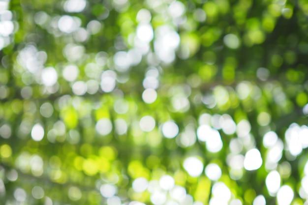 Abstraktes grünes bokeh aus fokushintergrund vom baum in der natur heraus