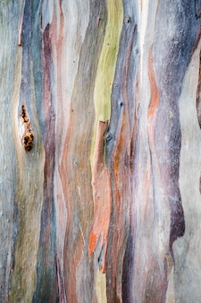 Abstraktes hintergrundmuster der bunten eukalyptus deglupta baumrinde