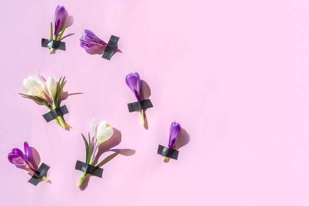 Abstraktes muster der frischen krokusblumen unter dem heftpflaster auf rosa.