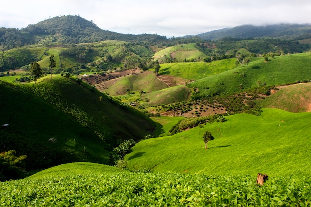 Ackerland auf dem berg