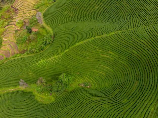 Ackerland der landwirtschaftlichen nutzfläche des pflanzers des grünen tees auf der vogelperspektive berg-chiang rai thailand vom brummen
