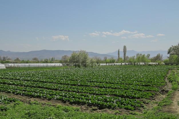 Ackerland mit wachsenden pflanzen