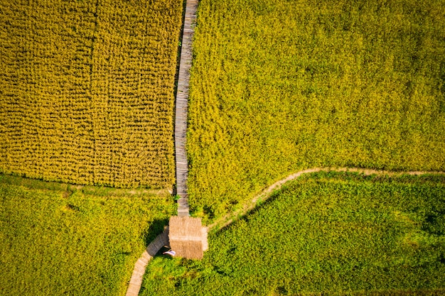 Ackerlandreisfelder und holzbrücken- und bambushütte südostasien