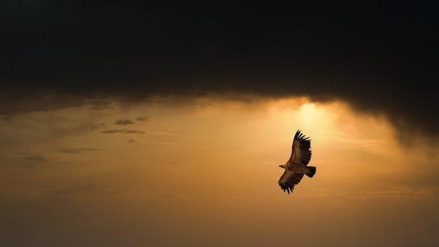 Adler fliegt im dunklen sonnenuntergangshimmel