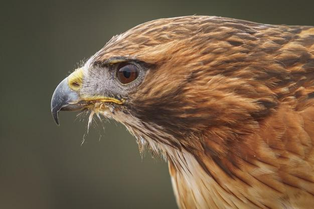 Adler in der natur