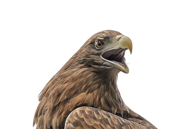 Adler mit offenem schnabel isoliert auf weißem hintergrund. foto in hoher qualität