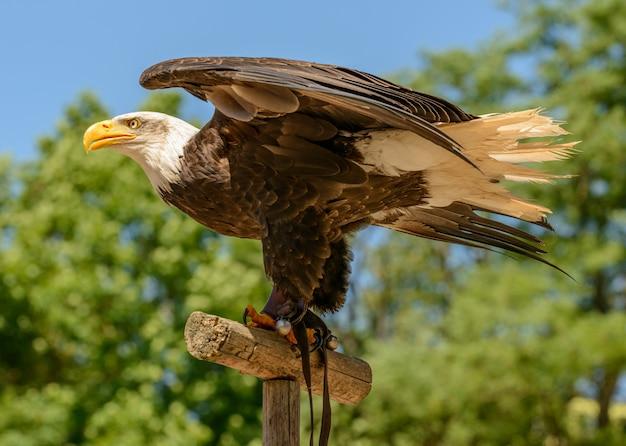 Adler sitzt auf einem stock im sonnenschein