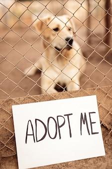 Adoptiere mich inschrift auf streunenden hundekäfig