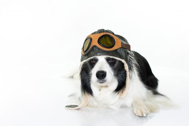 Adorable border collie dog liegt unten im boden mit einem pilotenhut.