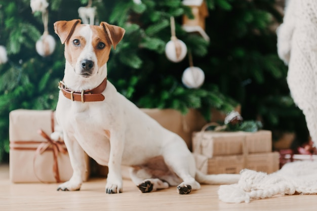 Adorable haustier sitzt auf dem boden in der nähe von geschmückten weihnachtsbaum, geschenkboxen, schaut irgendwo in die ferne.