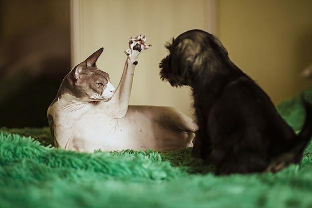 Ägyptische katze, die mit einem welpen auf dem bett spielt