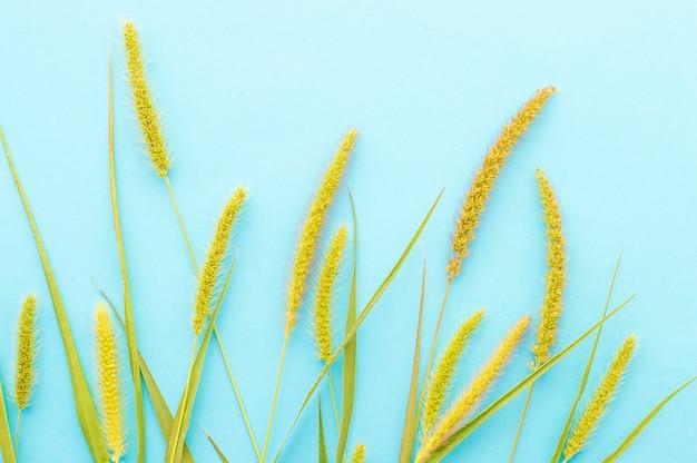 Ährchen gras auf einem blauen