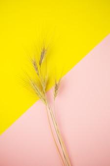 Ährchen weizen auf einem rosa-gelben hintergrund, platz für eine inschrift.