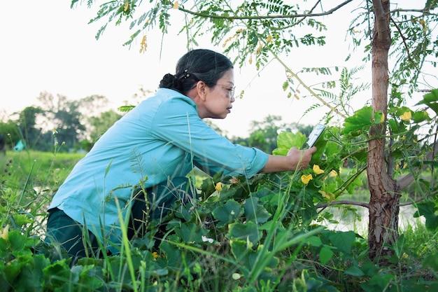 Ältere asiatische frau, die brillen unter verwendung des smartphones trägt, die fotos von pflanzen und baum im grünen naturhintergrund des bio-bauernhofs der landschaft machen.