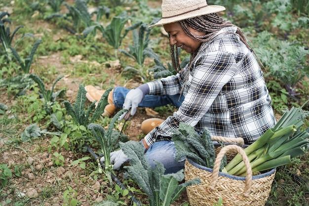 Ältere frau des bauern, die am gewächshaus arbeitet, während gemüse aufnimmt