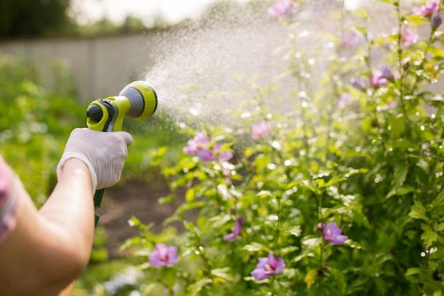Ältere frau, die ihre schönen blumen durch handbewässerungsröhre, gartenkonzept wässert