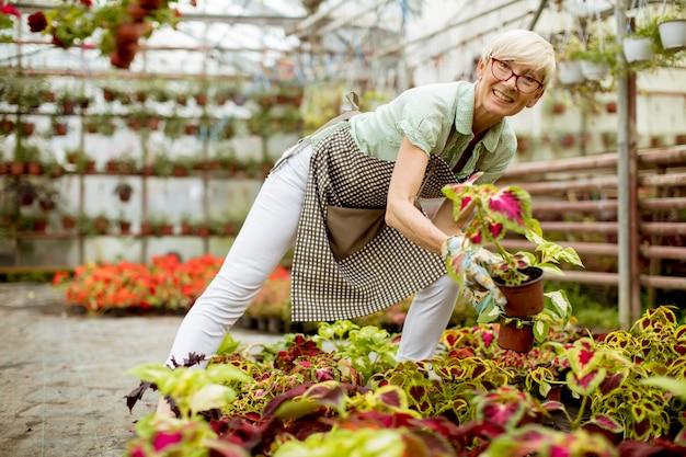 Ältere frau, die im blumengarten arbeitet
