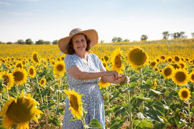 Ältere frau, die im sonnenblumenfeld arbeitet.