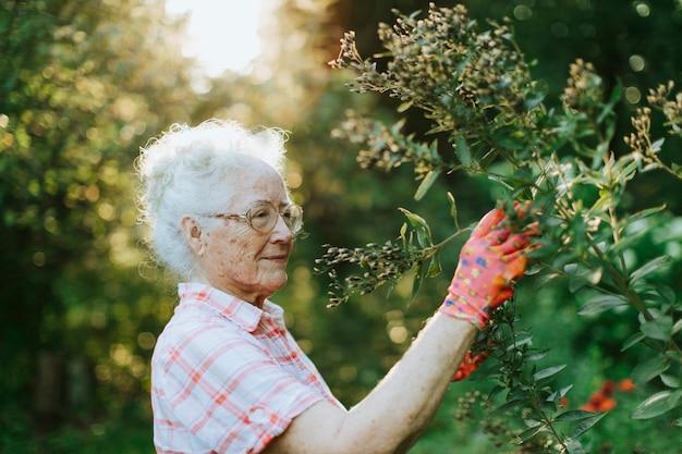 Ältere frau, die zu den blumen in ihrem garten neigt