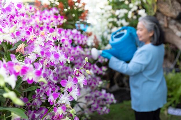 Ältere frau im ruhestand, die ihre blühenden orchideen im garten wässernd genießt glücklicher früher ruhestand.