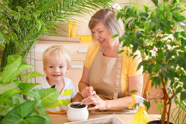 Ältere frau und ihr enkel des kleinen jungen genießen das pflanzen der pflanzenpflege der älteren frau zu hause