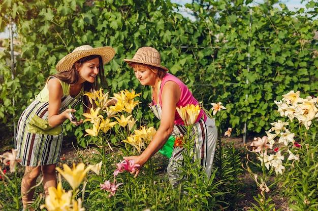 Ältere frau und ihre tochter, die blumen im garten erfasst. gärtner schneiden lilien mit gartenschere ab. gartenarbeitkonzept