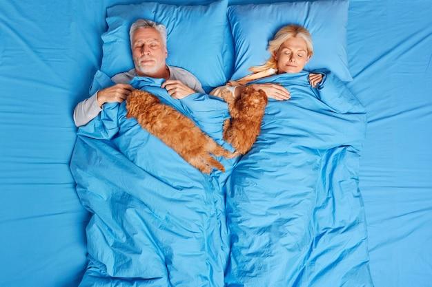 Ältere schlafende frau und mann, die unter weicher decke im bequemen bett liegen, zwei braune welpen in der nähe haben ein gesundes nickerchen mit besten freunden genießen gute nachtruhe. menschen familie schlafenszeit und haustiere konzept