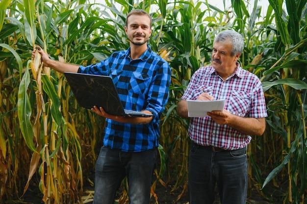 Ältere und junge landwirte, die in einem maisfeld mit tablet stehen, wegschauen und zeigen, sie untersuchen das unternehmen bei sonnenuntergang