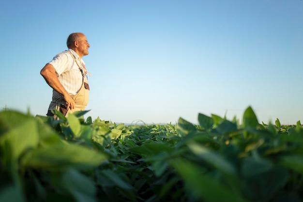 Älterer fleißiger landwirt-agronom im sojabohnenfeld, der in der ferne schaut