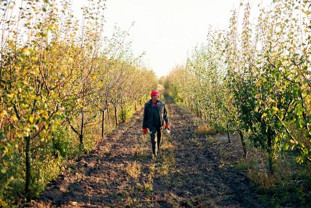 Älterer landwirt, der status der bäume beim gehen im obstgarten prüft.