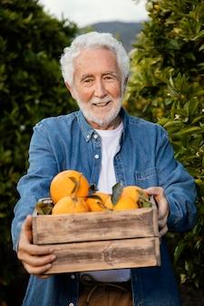 Älterer mann, der allein orangenbäume erntet