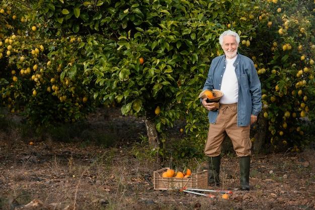 Älterer mann, der frische orangen erntet