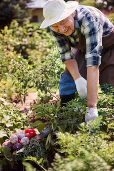 Älterer mann, der im feld mit einer kiste des gemüses arbeitet