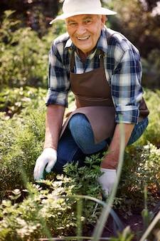 Älterer mann, der im feld mit pflanzen arbeitet
