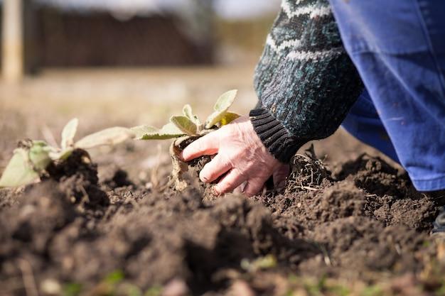 Älterer mann hände, die an seinem riesigen garten arbeiten und erde für das pflanzen vorbereiten
