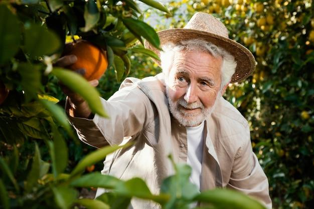 Älterer mann in der orangenbaumplantage