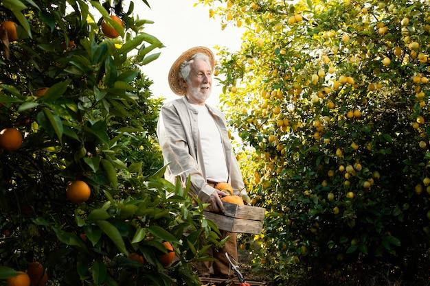 Älterer mann in orangenbaumplantage