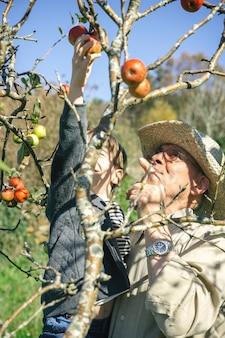 Älterer mann mit hut und süßem glücklichem kind, das an einem sonnigen herbsttag frische bio-äpfel vom baum pflücken. freizeitkonzept für großeltern und enkel.