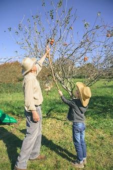 Älterer mann und süßes glückliches kind, das mit einem holzstab frische bio-äpfel vom baum pflücken. freizeitkonzept für großeltern und enkel.