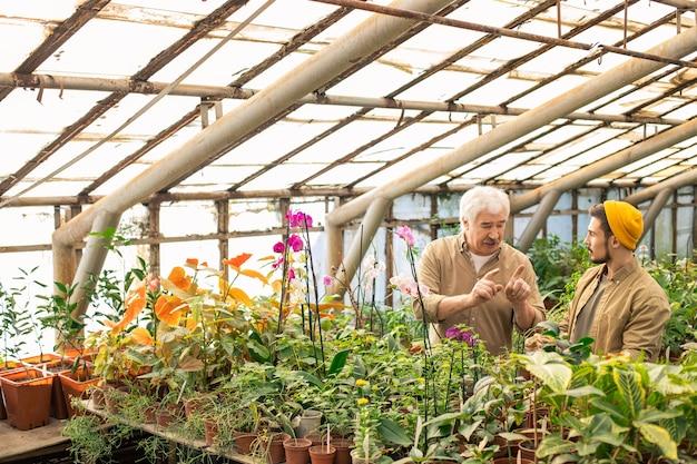 Älterer züchter, der hände gestikuliert, während er jungen arbeitern im gewächshaus ratschläge zum pflanzen gibt