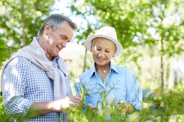 Älteres paar, das pflanzen inspiziert