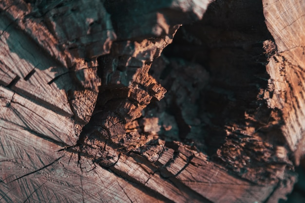 Älteste baumsäge schnitt in den zusammenhang der ringnahaufnahmebeschaffenheit