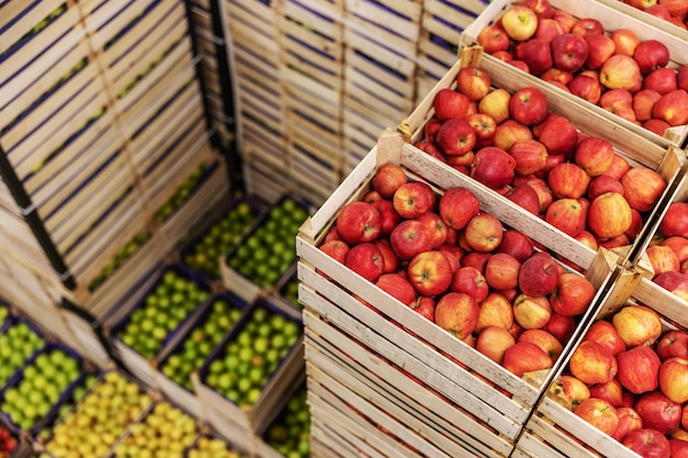 Äpfel und birnen in kisten versandfertig. kühlraum innenraum.